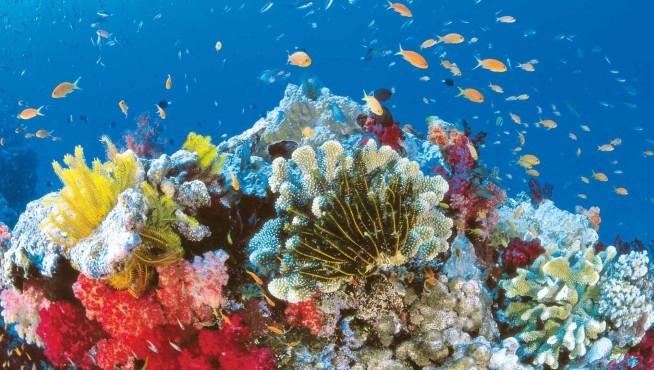 Подводная жизнь рифов