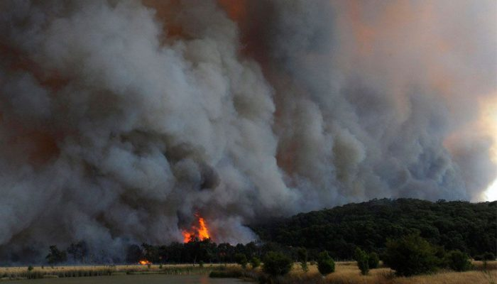 Леса горят