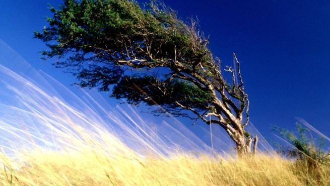 Сильный ветер дереьвья