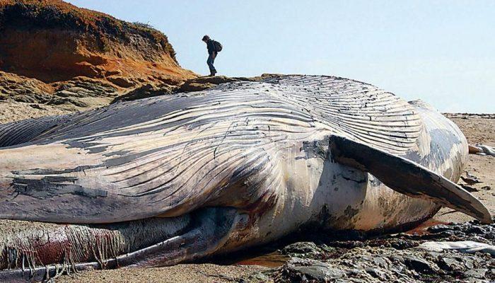 Загрязнение океана и гибель кита
