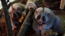 Детеныши приматов