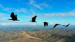 клинообразный строй птиц
