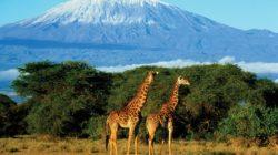 Вулкан Килиманджаро