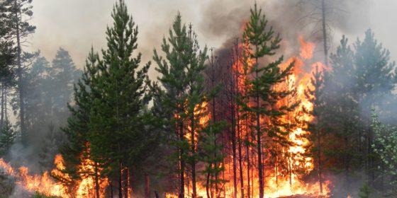 Пожары в лесах реферат 920